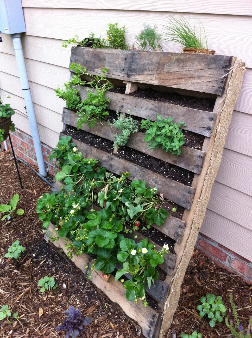 pallet gardening innovativegardening